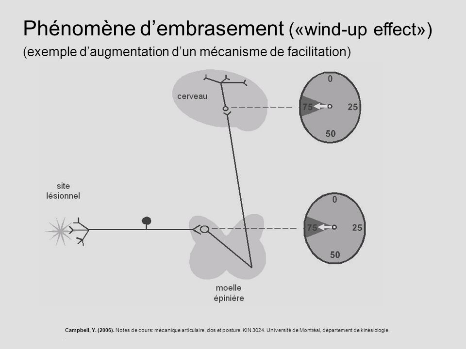 Phénomène d'embrasement («wind-up effect»)