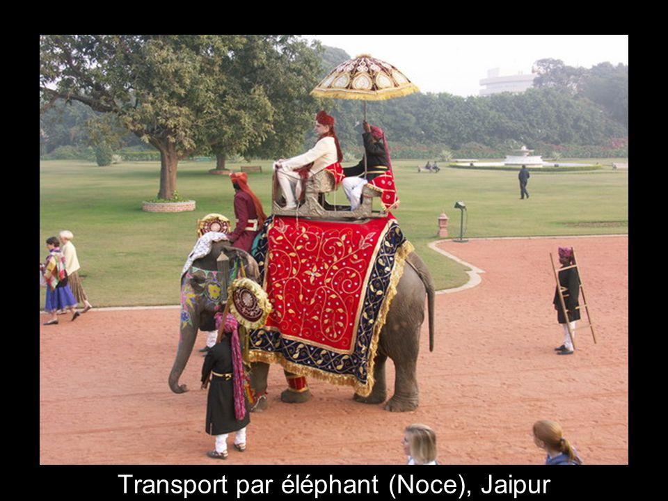 Transport par éléphant (Noce), Jaipur