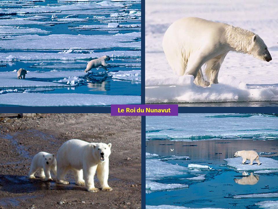 Le Roi du Nunavut