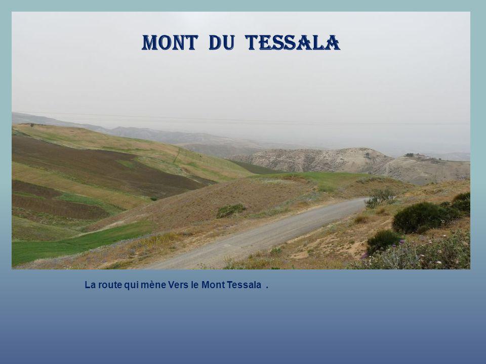 Mont du tessala La route qui mène Vers le Mont Tessala .