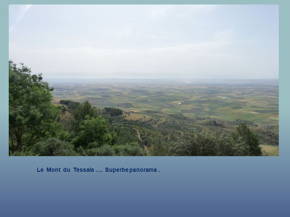 Le Mont du Tessala …. Superbe panorama .