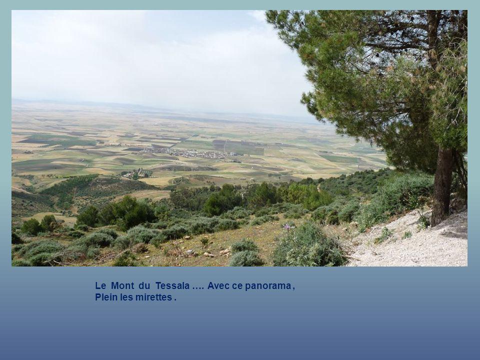 Le Mont du Tessala …. Avec ce panorama , Plein les mirettes .