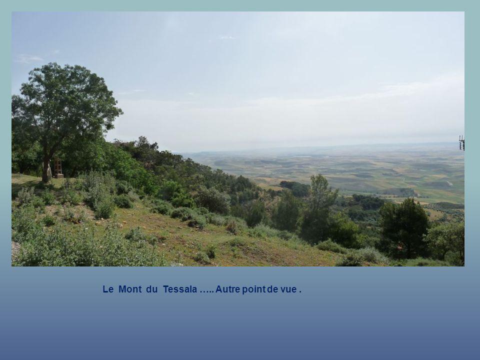 Le Mont du Tessala ….. Autre point de vue .