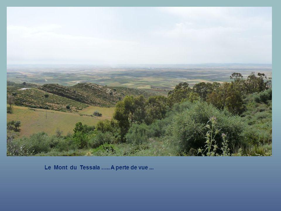 Le Mont du Tessala ….. A perte de vue ...