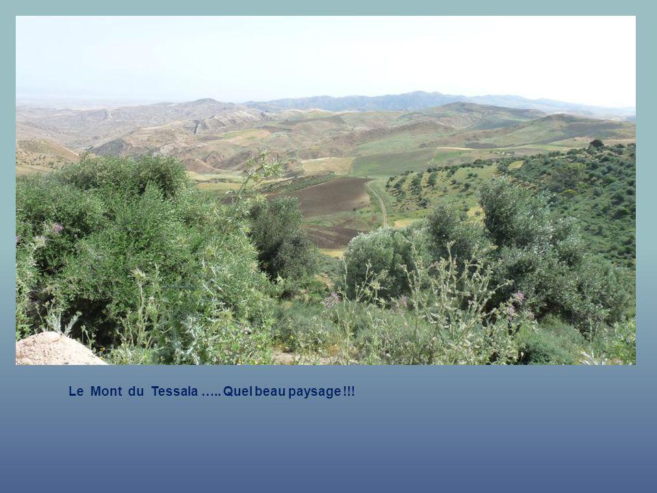 Le Mont du Tessala ….. Quel beau paysage !!!