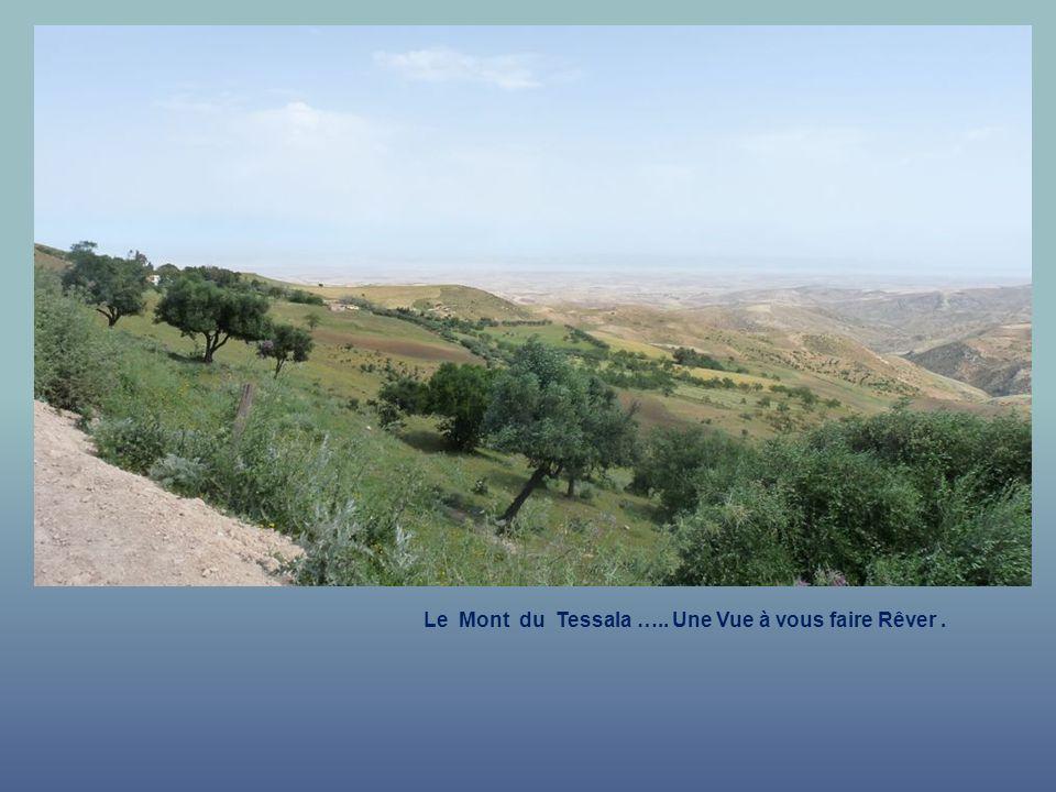 Le Mont du Tessala ….. Une Vue à vous faire Rêver .