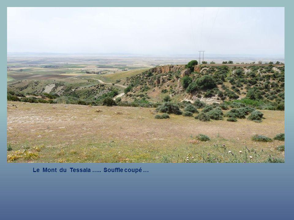 Le Mont du Tessala ….. Souffle coupé …