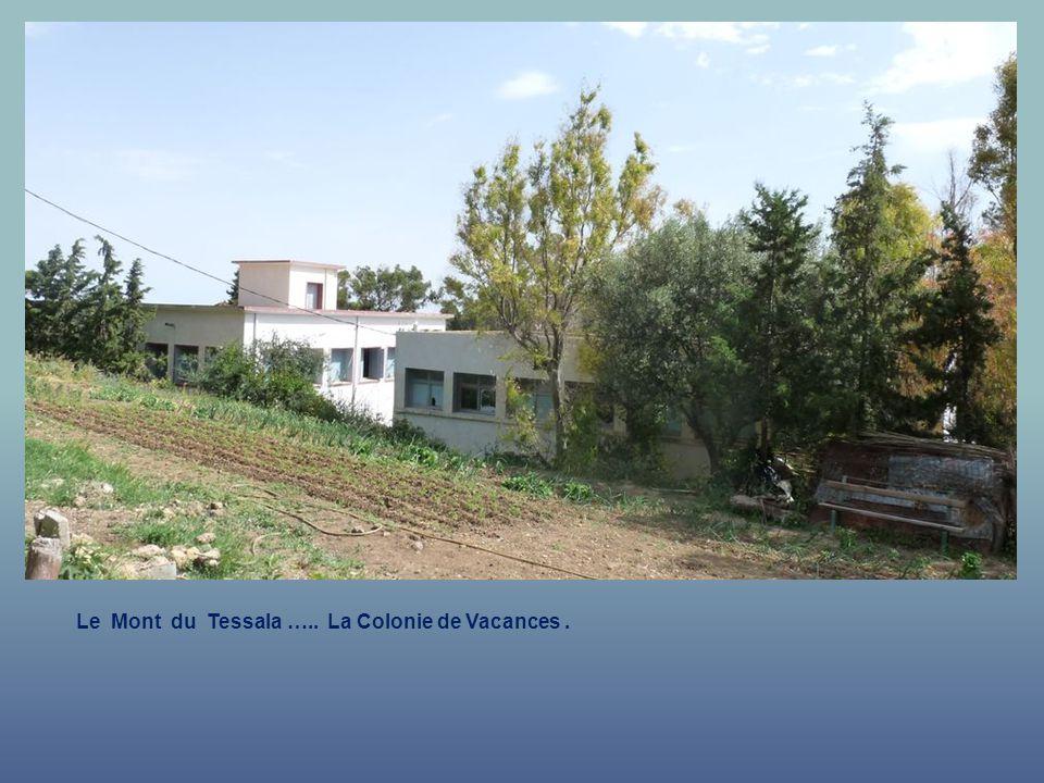 Le Mont du Tessala ….. La Colonie de Vacances .