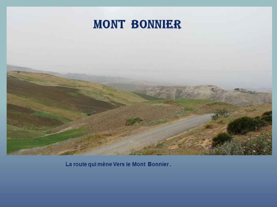 Mont bonnier La route qui mène Vers le Mont Bonnier .