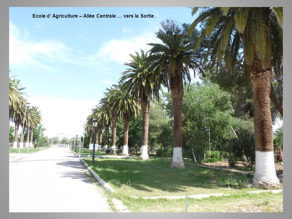 Ecole d' Agriculture – Allée Centrale … vers la Sortie .