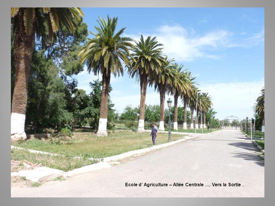 Ecole d' Agriculture – Allée Centrale …. Vers la Sortie .