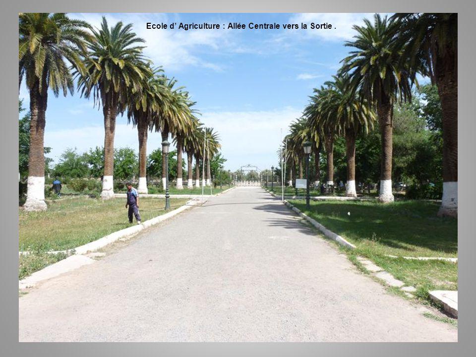 Ecole d' Agriculture : Allée Centrale vers la Sortie .
