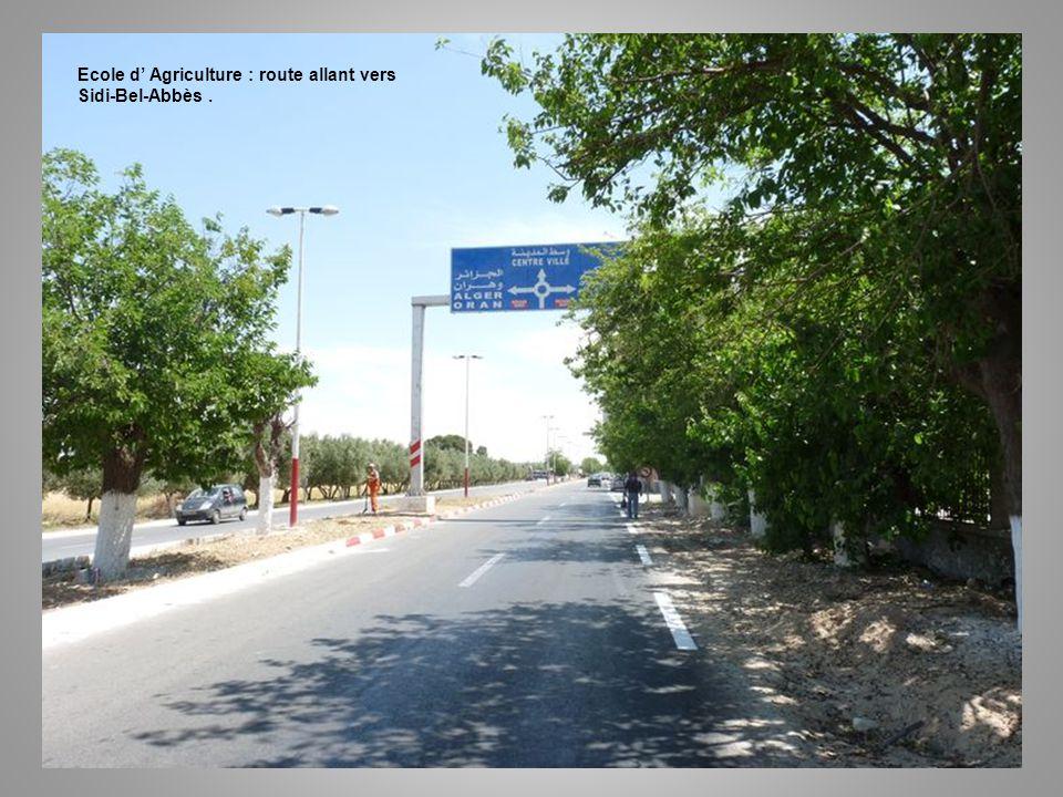 Ecole d' Agriculture : route allant vers Sidi-Bel-Abbès .