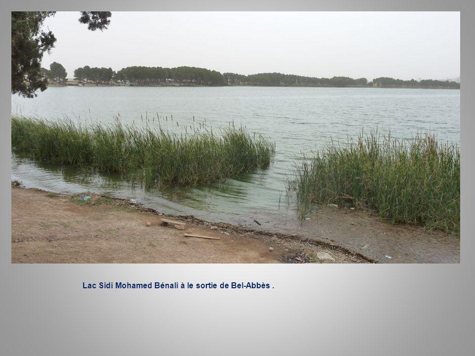 Lac Sidi Mohamed Bénali à le sortie de Bel-Abbès .
