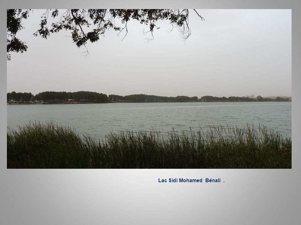 Lac Sidi Mohamed Bénali .