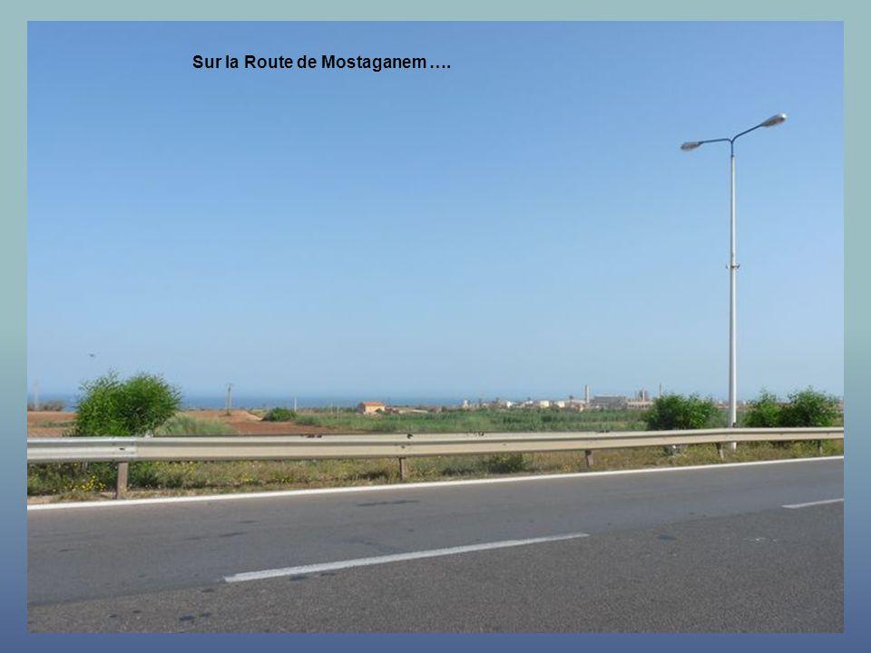 Sur la Route de Mostaganem ….