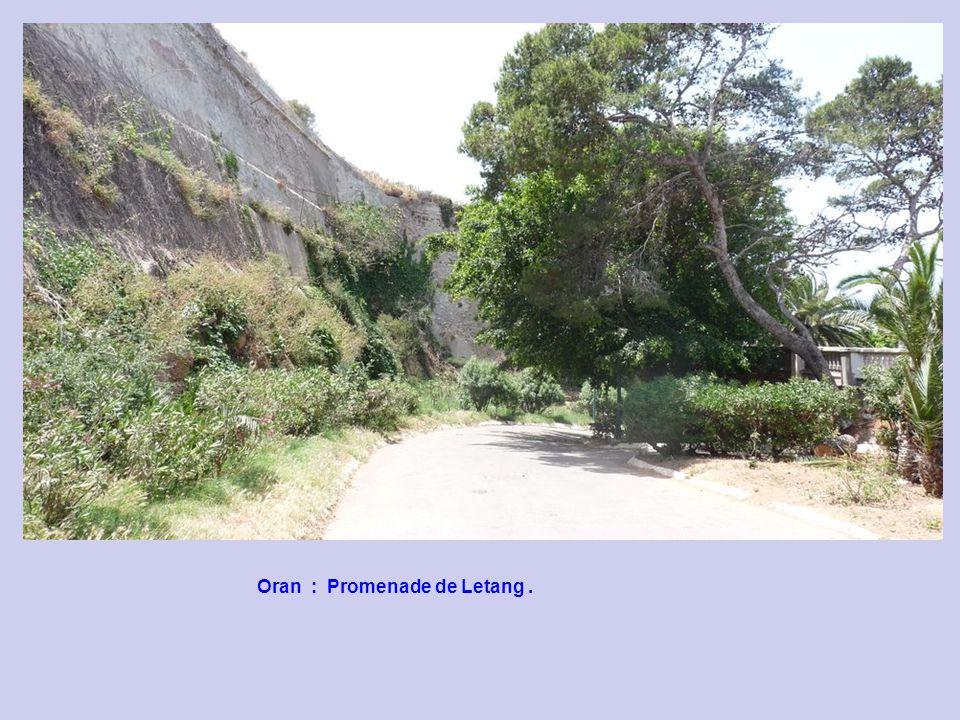 Oran : Promenade de Letang .