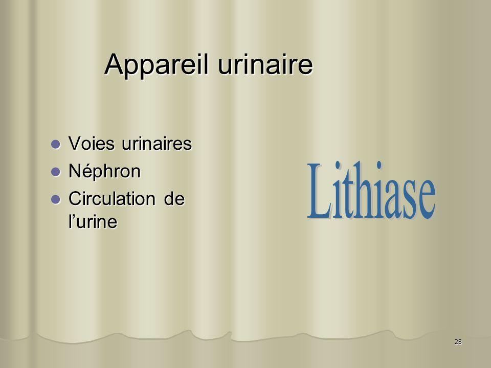 Appareil urinaire Lithiase Voies urinaires Néphron