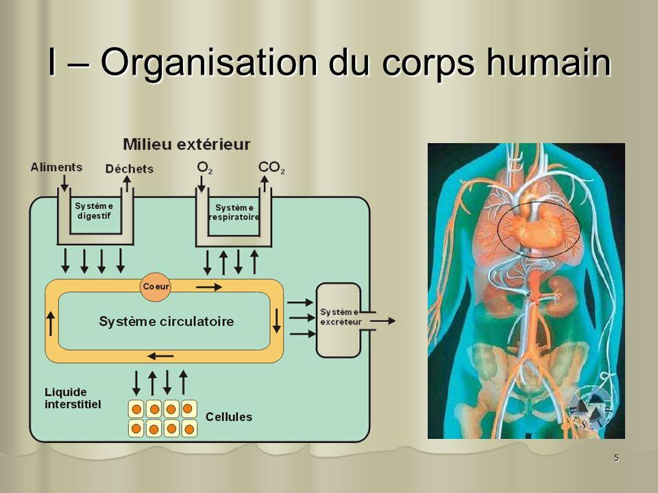 I – Organisation du corps humain