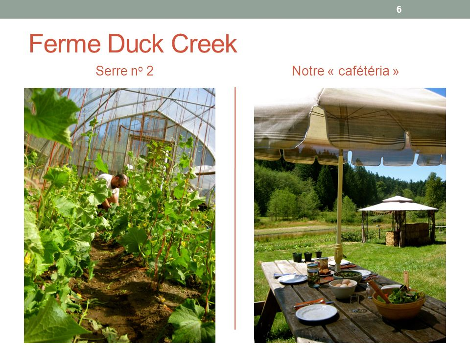 Ferme Duck Creek Serre no 2 Notre « cafétéria »
