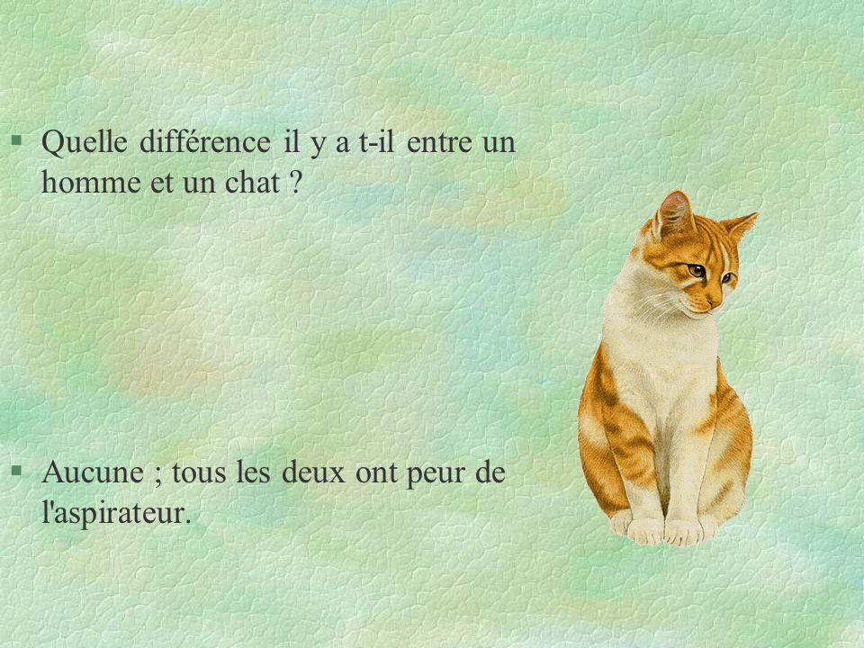 Quelle différence il y a t-il entre un homme et un chat