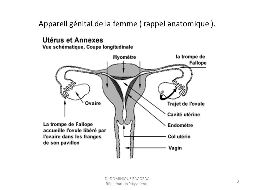 Appareil génital de la femme ( rappel anatomique ).