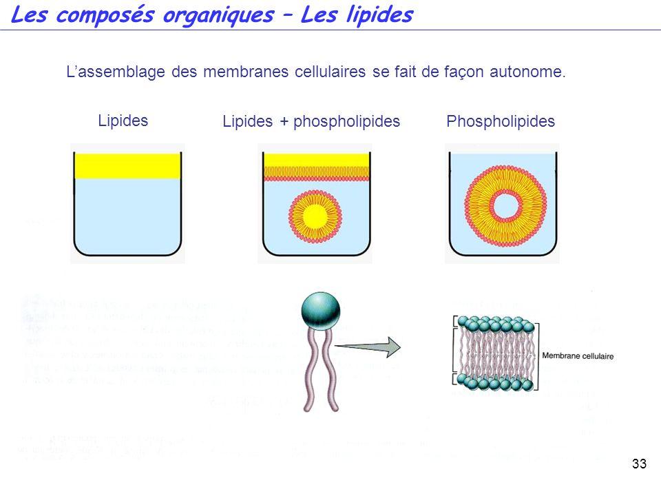 Les composés organiques – Les lipides