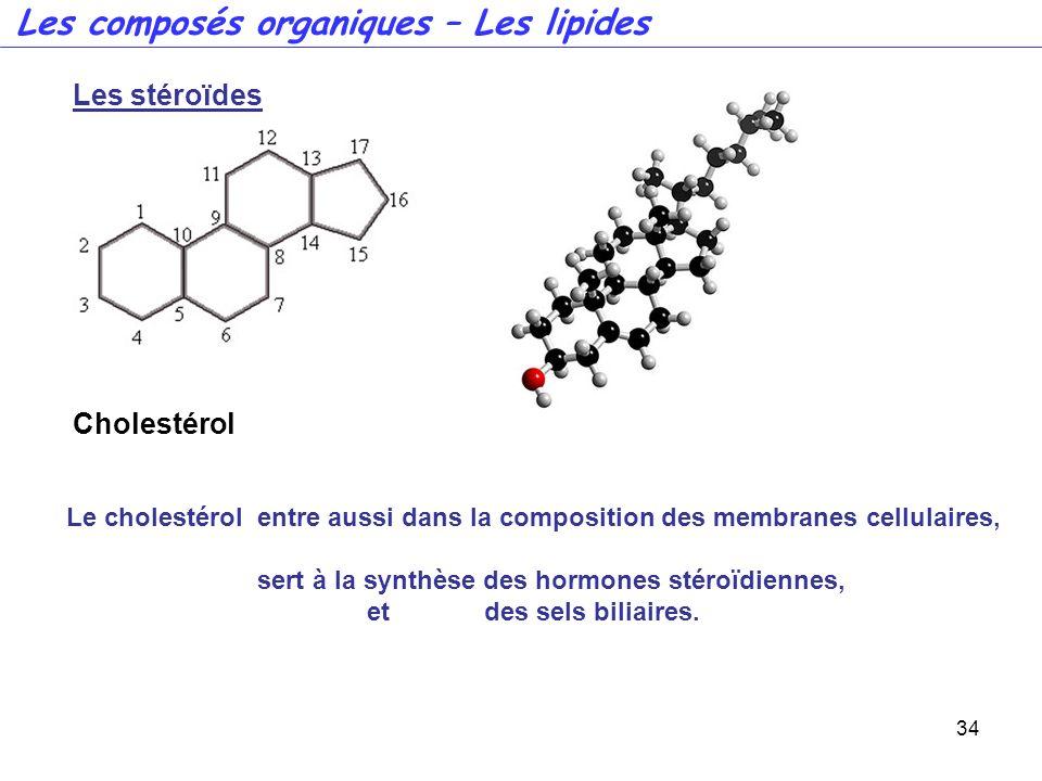 sert à la synthèse des hormones stéroïdiennes,