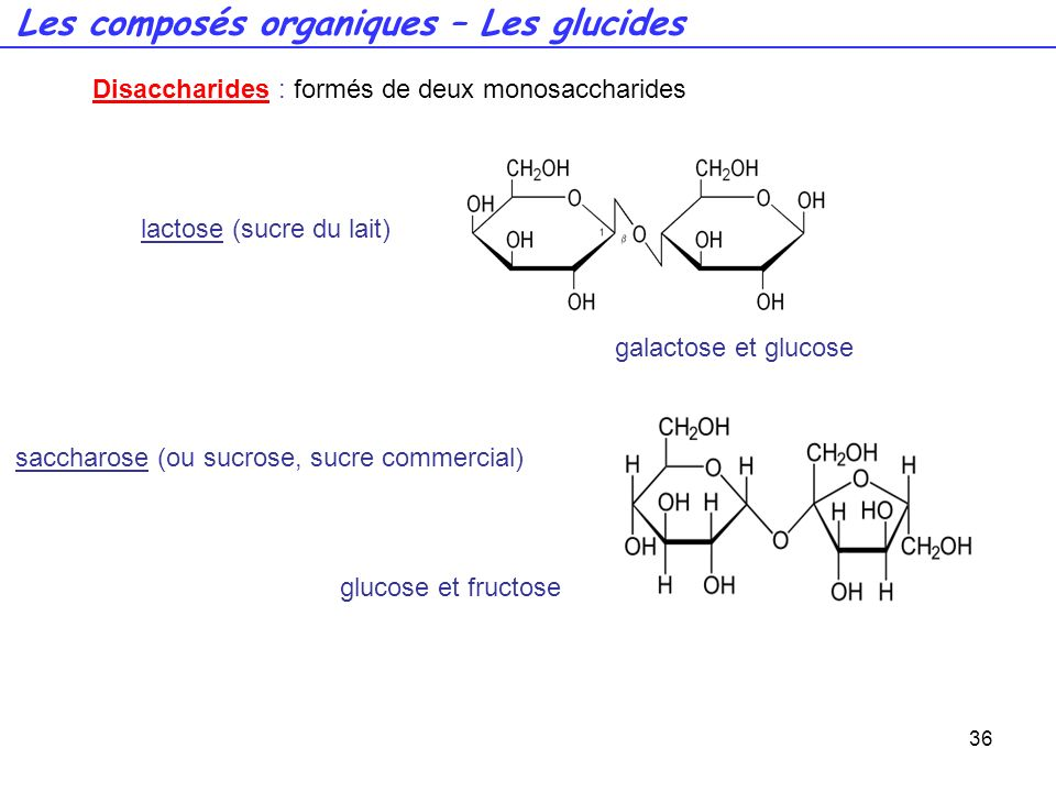 Les composés organiques – Les glucides