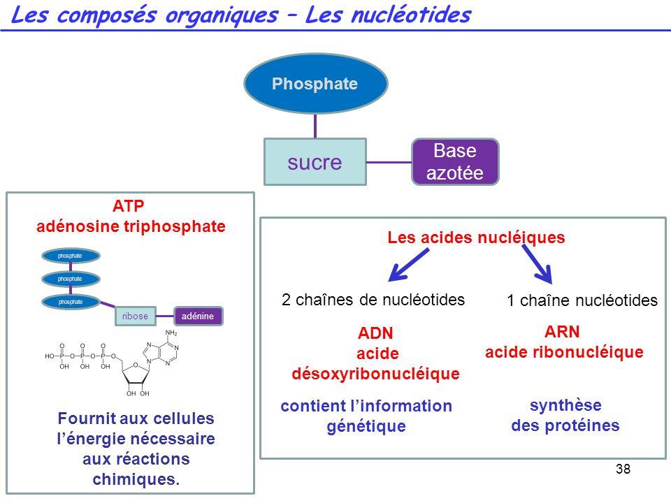 Les composés organiques – Les nucléotides