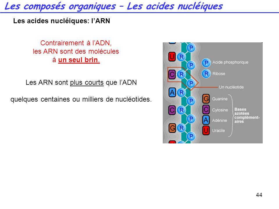 Les acides nucléiques: l'ARN