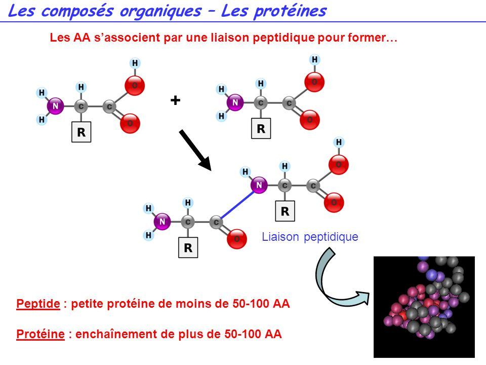 + Les composés organiques – Les protéines