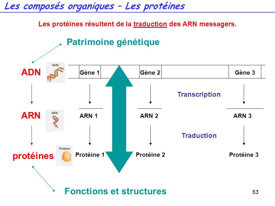 Les protéines résultent de la traduction des ARN messagers.