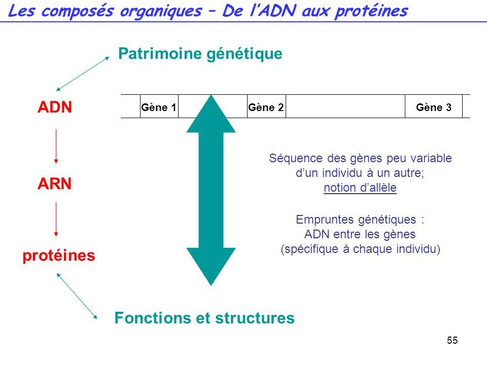 Les composés organiques – De l'ADN aux protéines