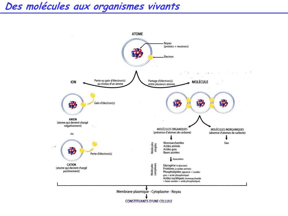 Des molécules aux organismes vivants