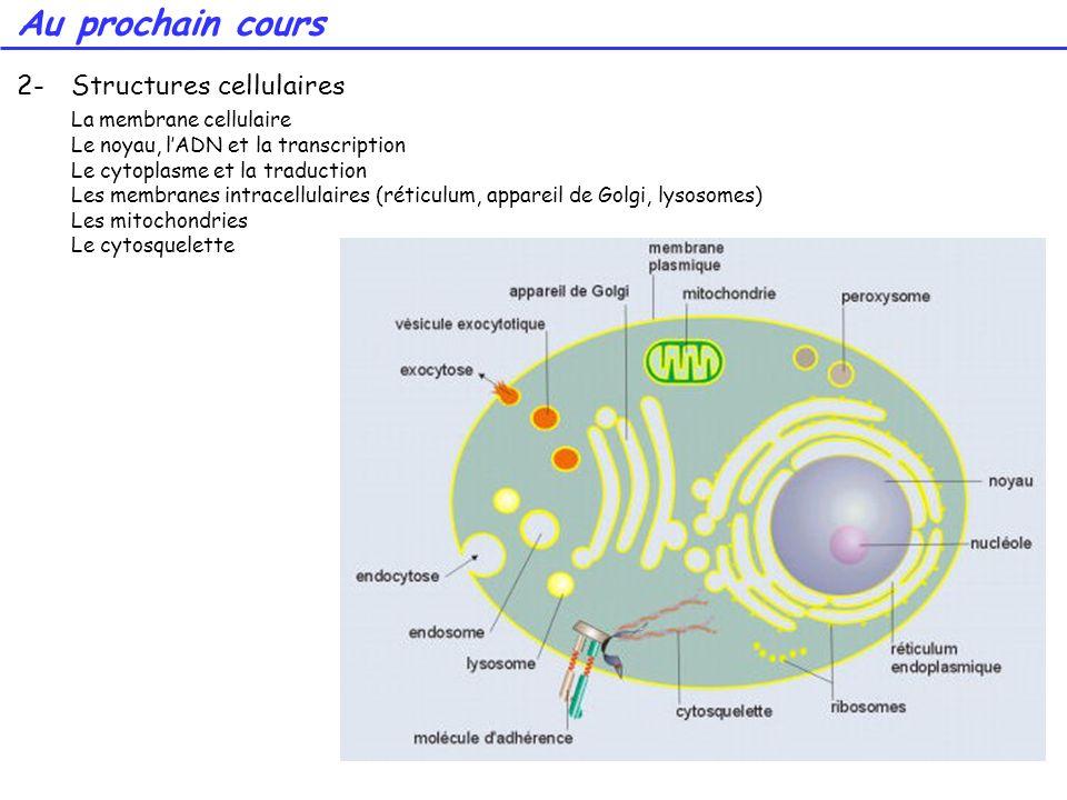 Au prochain cours 2- Structures cellulaires La membrane cellulaire