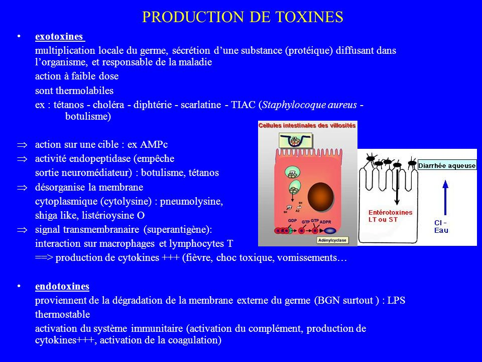 PRODUCTION DE TOXINES exotoxines