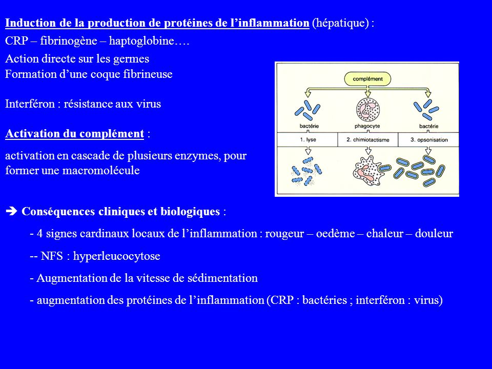 Induction de la production de protéines de l'inflammation (hépatique) :