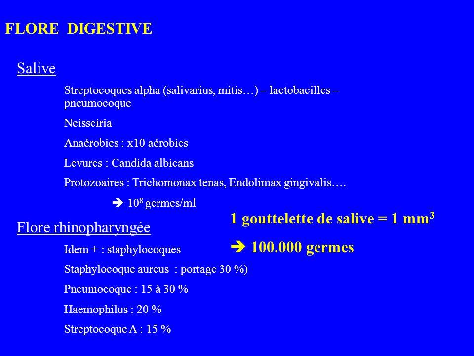 1 gouttelette de salive = 1 mm3  100.000 germes