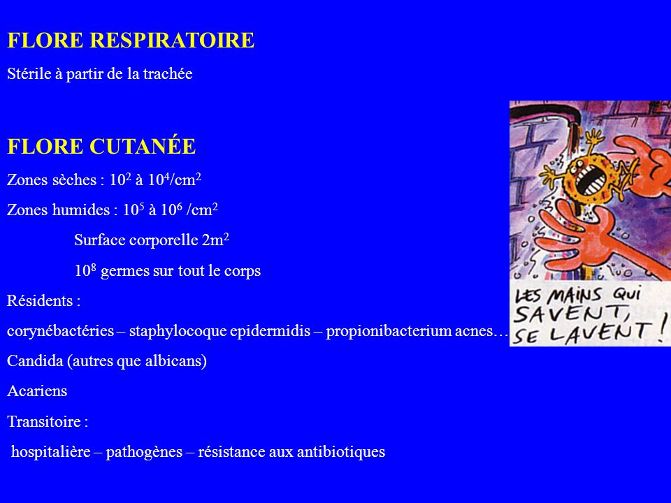 FLORE RESPIRATOIRE FLORE CUTANÉE Stérile à partir de la trachée