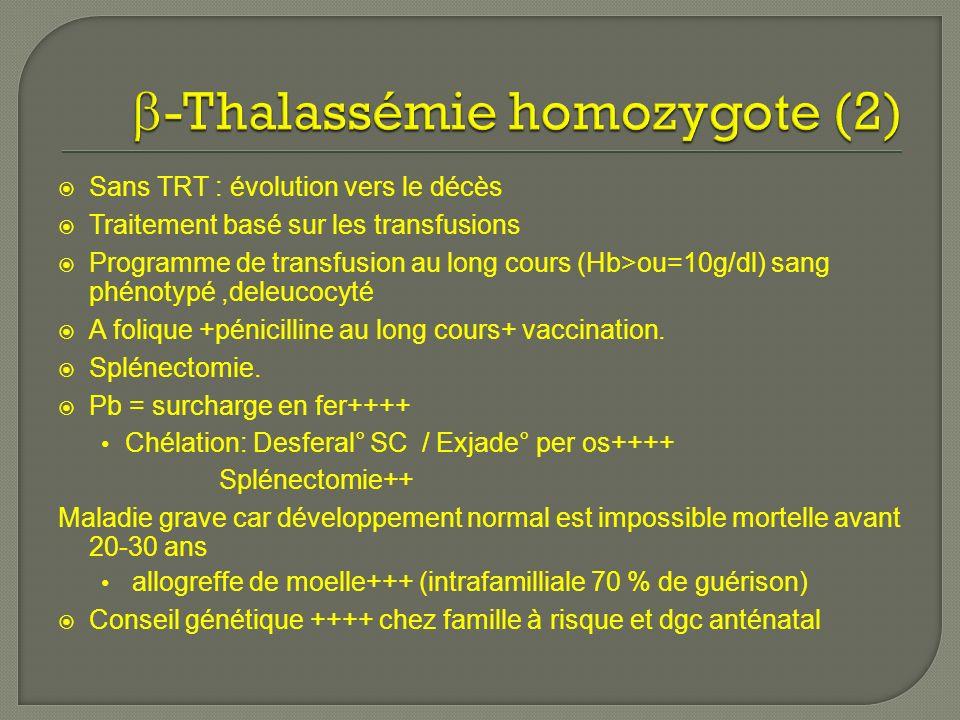 -Thalassémie homozygote (2)