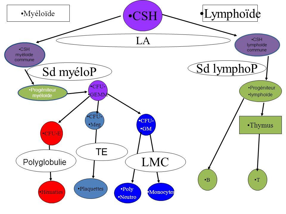 CSH Lymphoïde Sd lymphoP Sd myéloP LMC LA TE Myéloïde Polyglobulie