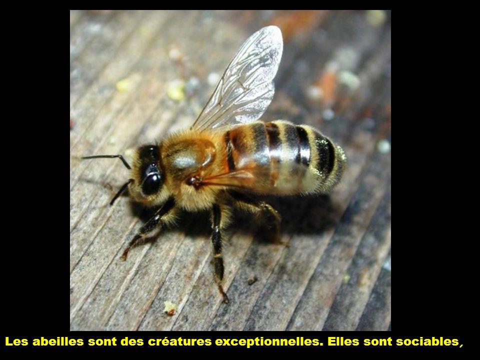 Les abeilles sont des créatures exceptionnelles. Elles sont sociables,