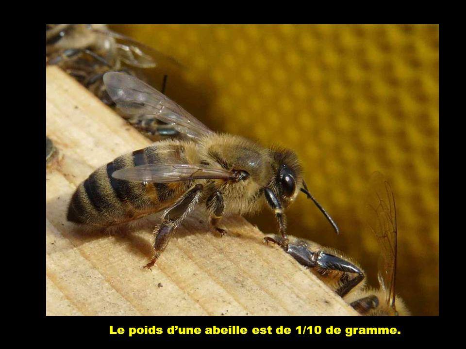 Le poids d'une abeille est de 1/10 de gramme.