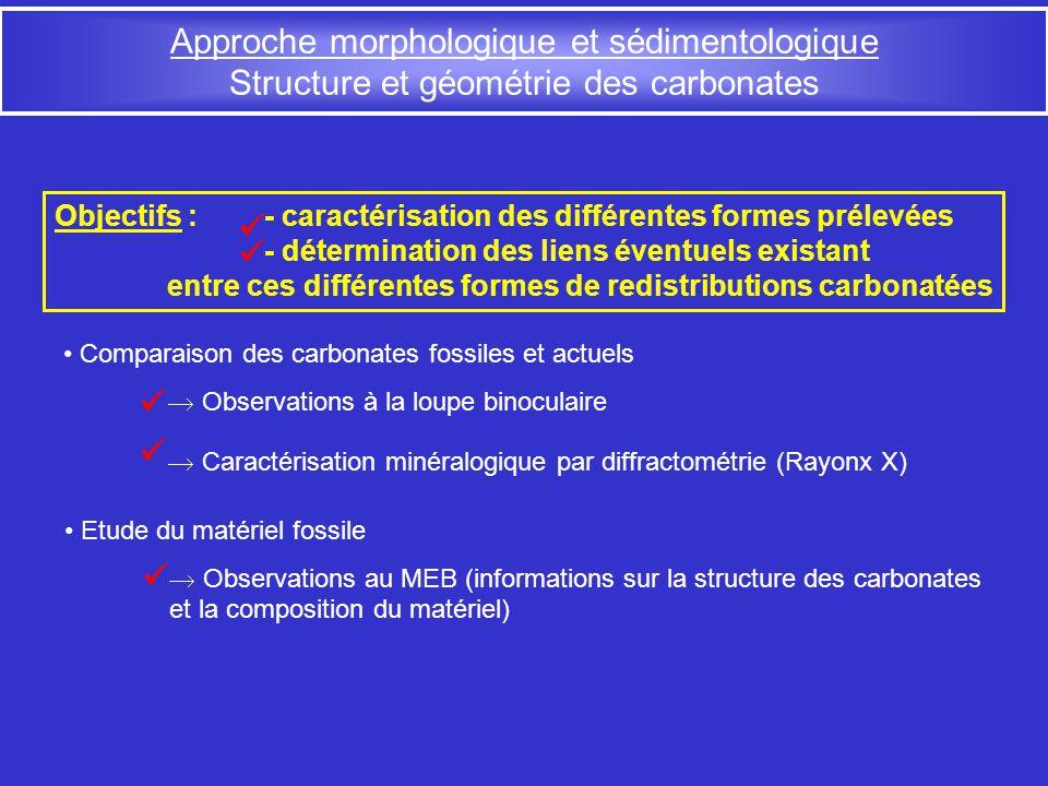 Approche morphologique et sédimentologique