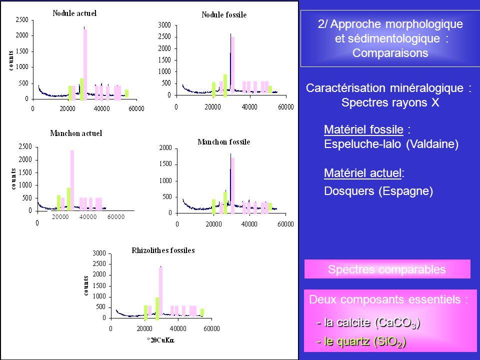2/ Approche morphologique et sédimentologique : Comparaisons