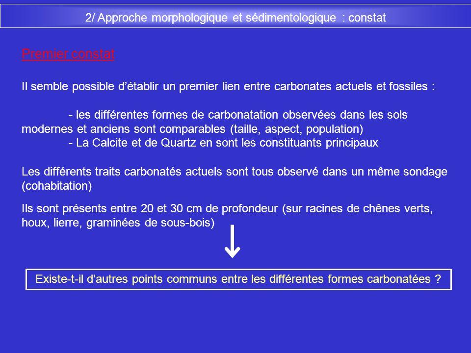 2/ Approche morphologique et sédimentologique : constat