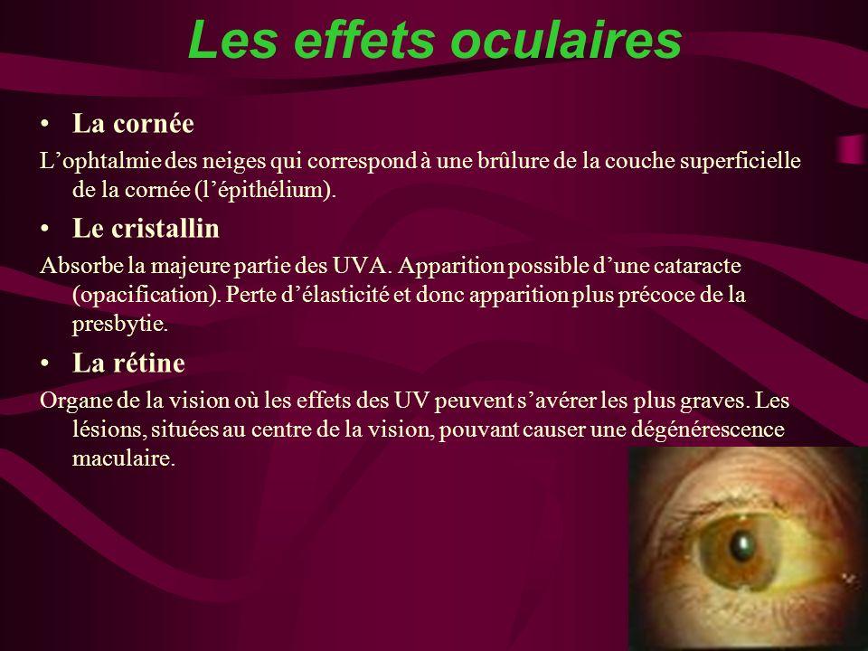 Les effets oculaires La cornée Le cristallin La rétine