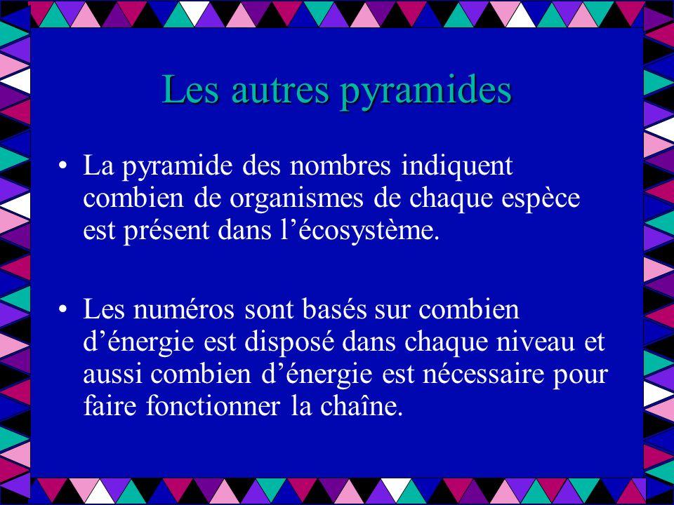 Les autres pyramides La pyramide des nombres indiquent combien de organismes de chaque espèce est présent dans l'écosystème.