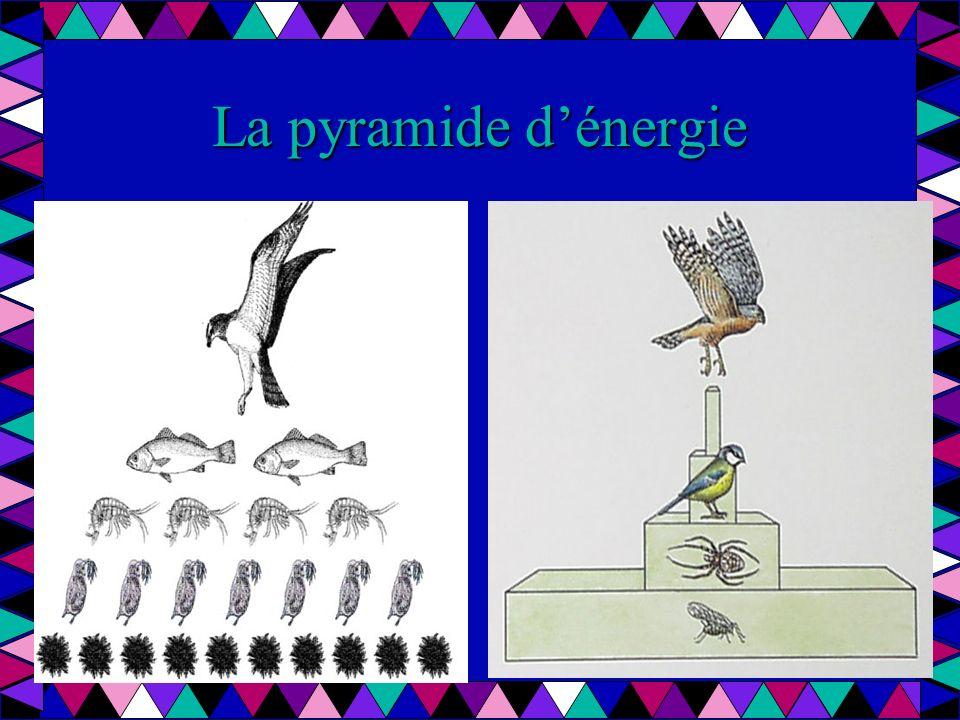 La pyramide d'énergie